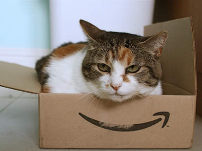 cat in amazon shipping box