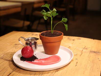 spot dessert bar potted plant
