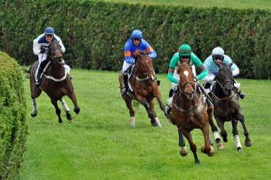 racetrack gambling horses