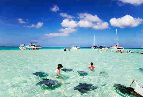 Stingray City Cayman islands