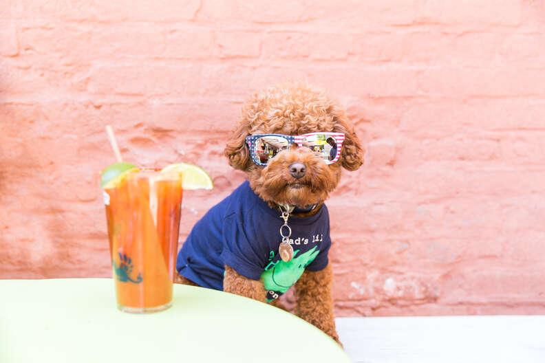 Puppy Brunch NYC