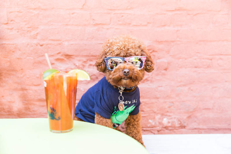 Puppy Brunch NYC