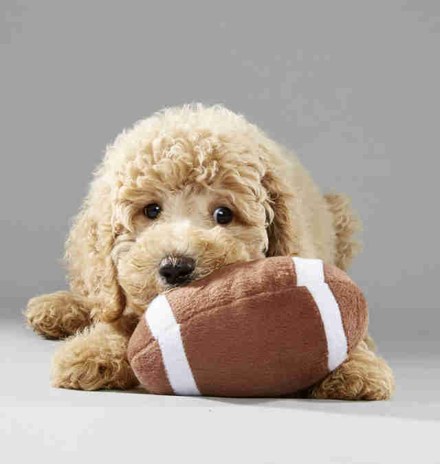 Puppy Bowl Puppies
