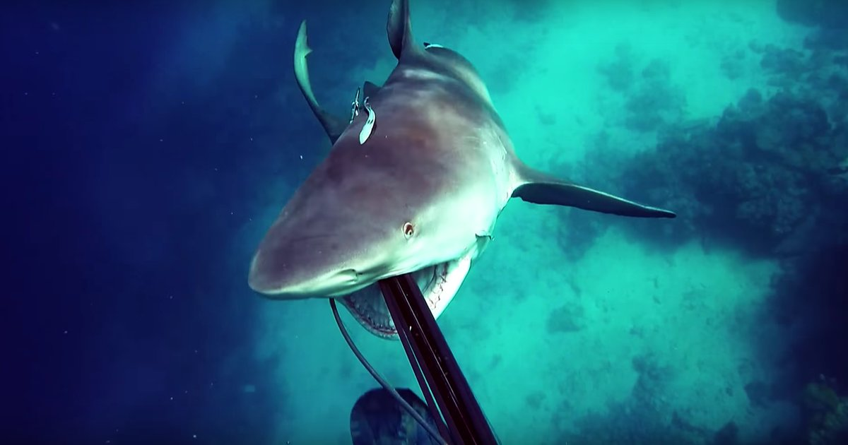 Shark comparrison and social anxiety