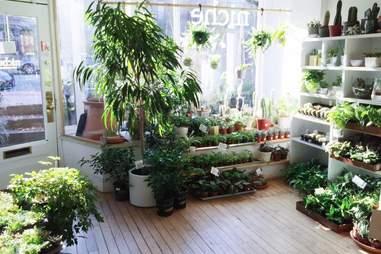 Niche Urban Garden Supply