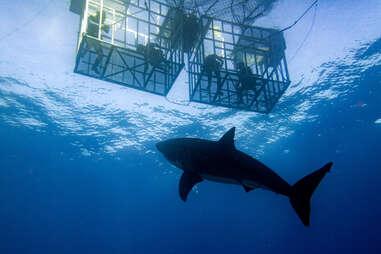 Shark Dive San Diego