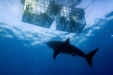 Shark Dive San Diego