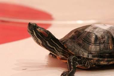 turtle races chicago dive bar