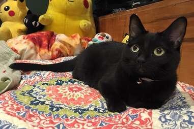 The Black Cat Market