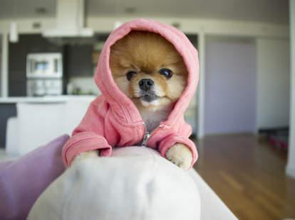 LA instagram dogs to follow
