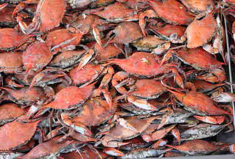 crabs from jessie taylor seafood
