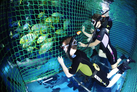 swimming with sharks at the london aquarium is easy