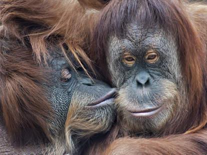 monkeys tinder dating apps