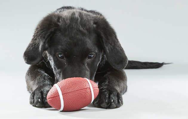 How to Watch the Puppy Bowl and Overdose on Cuteness