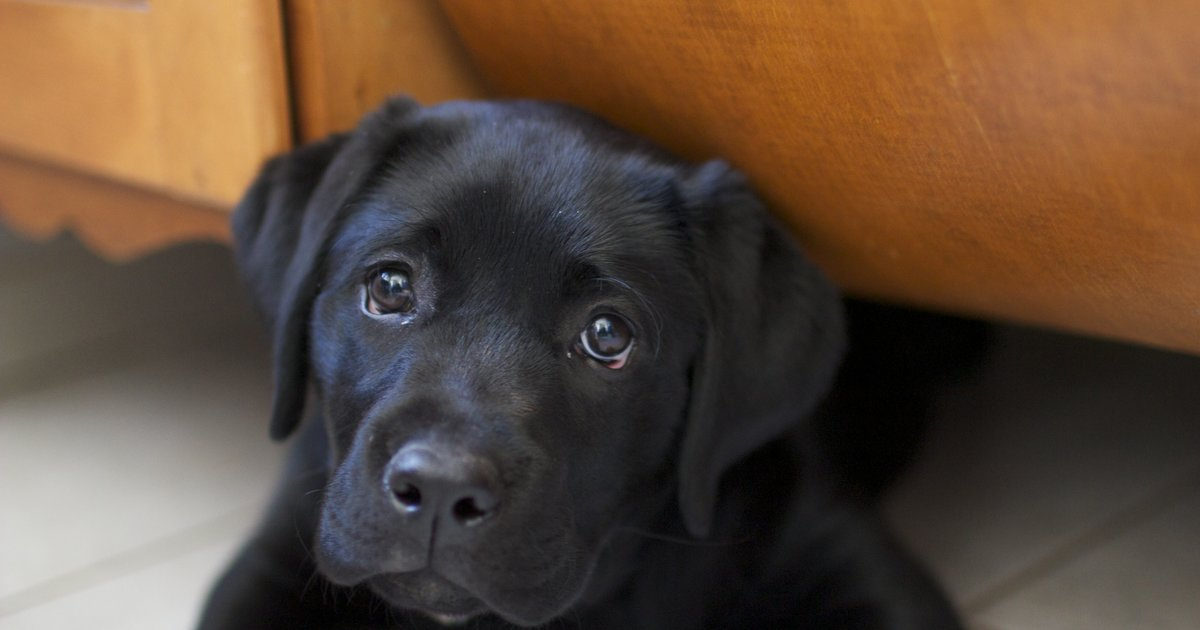 This Brewery Gives a Week of Paid Leave to Employees With New Puppies