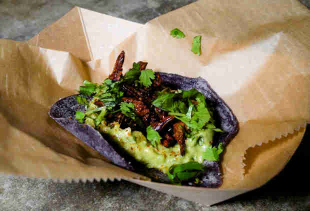 The Mexican-Style Grasshopper Tacos You Have to Try When You're in South Beach