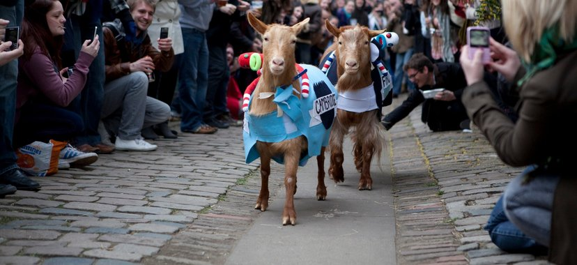 The Oxford & Cambridge Goat Race