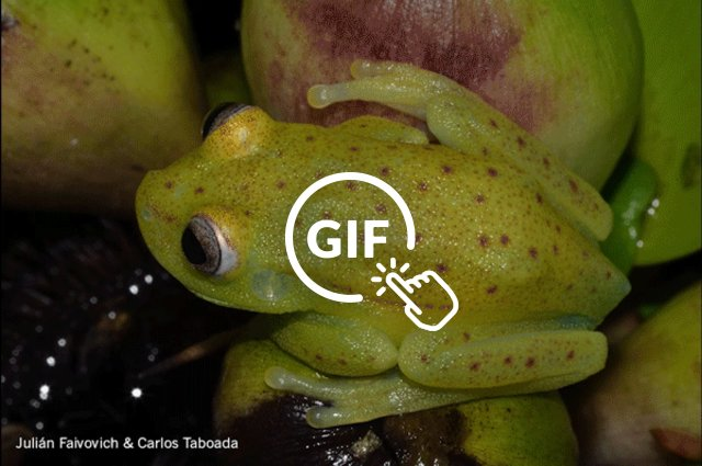 world's first fluorescent tree frog