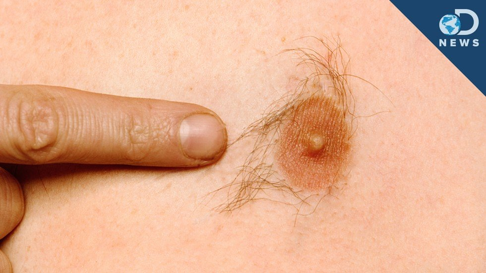 Why Do Men Have Nipples - Seeker-2580