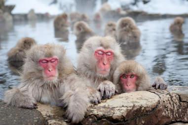 wild monkey park