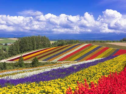 incredible sights in japan
