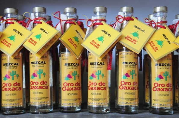 Agave Is Being Over-Harvested to Extinction to Quench Our Thirst for Mezcal