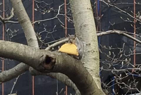 Taco Squirrel