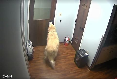 dog opening animal hospital door