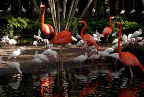 Things to do in fort lauderdale fl thrillist - Flamingo gardens fort lauderdale ...