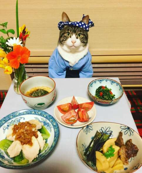 cat dresses up with his mom for dinner