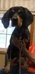 Dog found as stray in South Carolina
