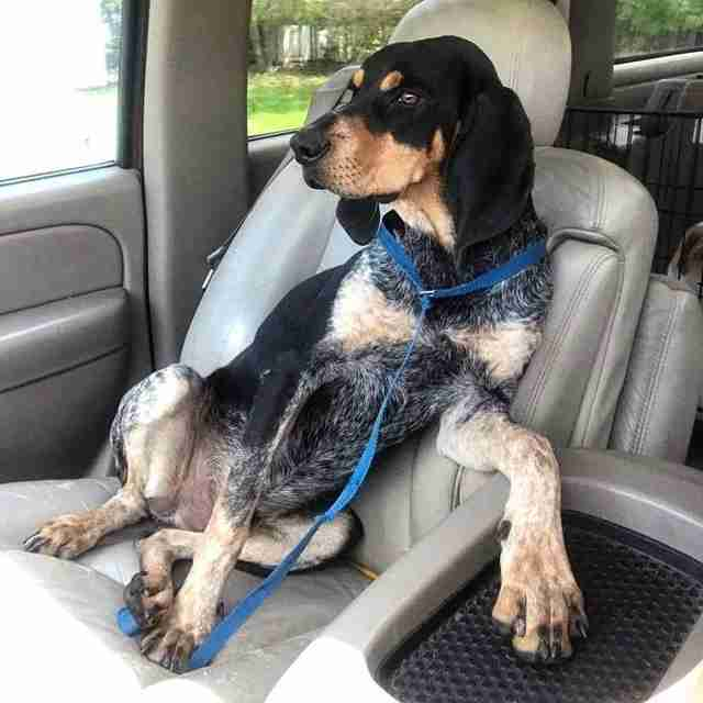 Dog found as stray in South Carolina strikes pose in car