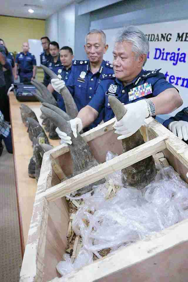 18 rhino horns that were seized in Malaysia