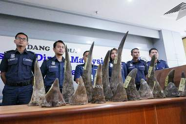 18 rhino horns that were seized in Malaysia