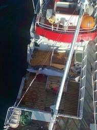 A dead minke whale on a Norwegian whaling ship