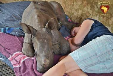 A baby rhino orphan who lost her mom to poaching
