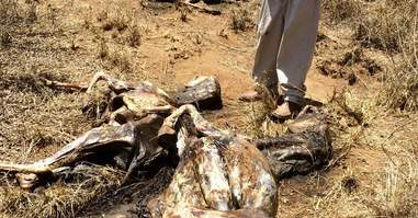 in Tanzania village 24 donkeys were stolen and killed for the skin trade