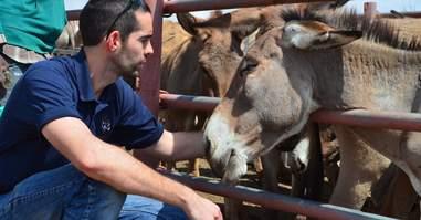 donkey holding pen tanzania