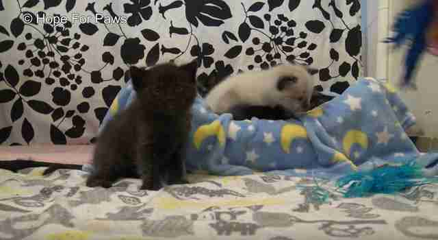 cat and kittens rescued from drain pipe