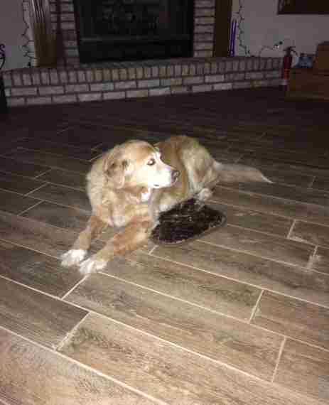 Tiny Bed dog pretends to love the tiny bed his mom orderedmistake - the