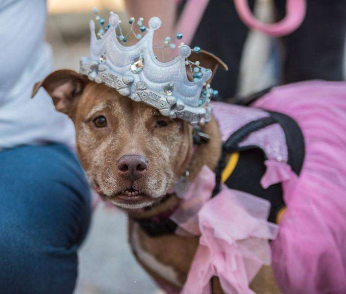 senior prom held for older dogs to help them get adopted