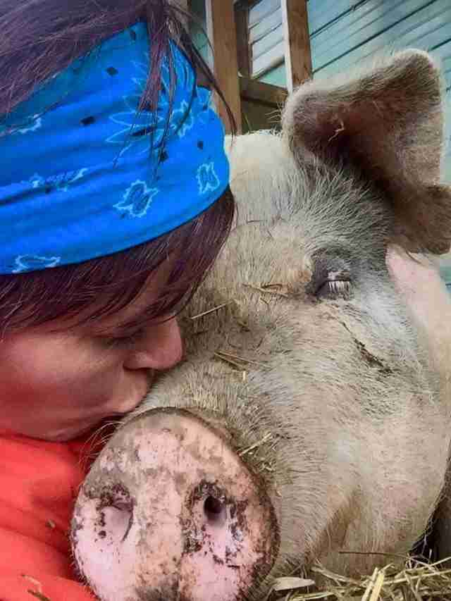 Ontario pig getting a kiss from owner of Kingston, ON, sanctuary