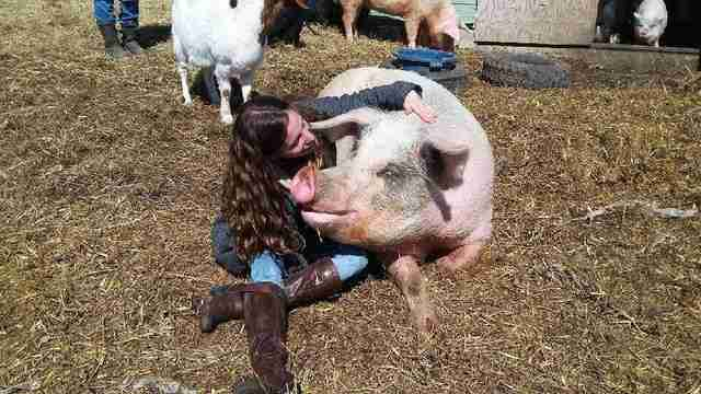Ontario pig reuniting with her rescuer