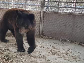 Bear trapped in derelict Aleppo, Syria zoo