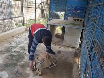Gazelle found dead of starvation in Aleppo zoo