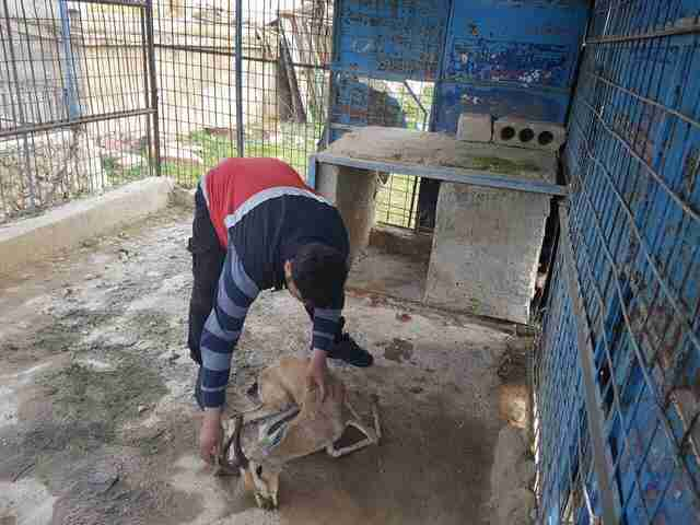 Gazelle found dead of starvation in Aleppo zoo
