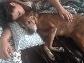 Senior shelter dog napping with his rescuer