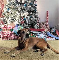 Senior shelter dog saved in time for Christmas