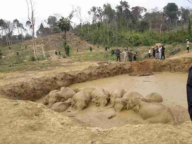 Elephant herd stuck in bomb crater in Cambodia