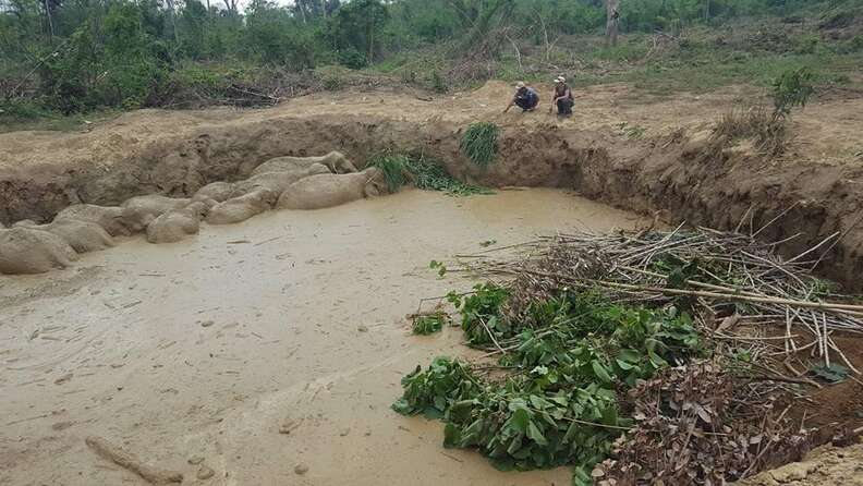 Rescuers come for elephant herd stuck in bomb crater in Cambodia